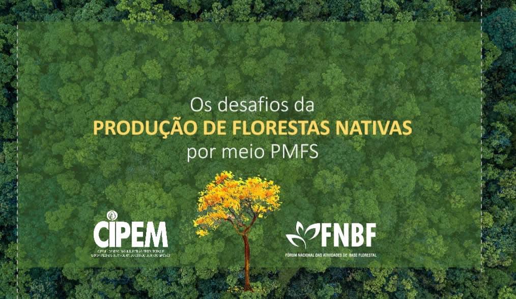 Os Desafios da Produção de Florestas Nativas por meio do Plano de Manejo Florestal